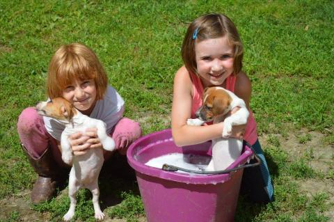 Best Irish Jack Russell Breeders | Irish Terrier Dogs