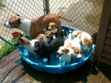 dog daycare services